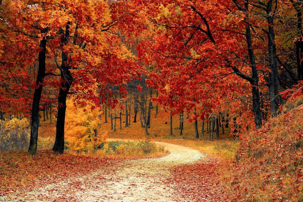 韓国ドラマ 秋の童話