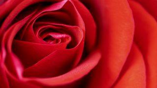 韓ドラ 棘のある花 | 女の秘密の2本立て